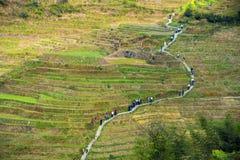 Modo attraverso i terrazzi del riso in Longsheng, Cina Fotografia Stock