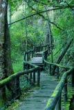 Modo attraverso la foresta Immagine Stock
