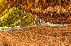 Modo classico di essiccamento del tabacco Fotografie Stock