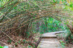 Modo con il tunnel dell'albero alla destinazione Fotografie Stock Libere da Diritti