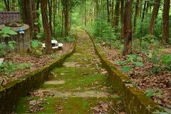 Modo del percorso della natura Fotografie Stock