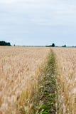 Modo del percorso nel campo di grano immagini stock