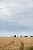 Modo del percorso nel campo di grano fotografie stock libere da diritti