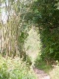 Modo dell'arco della traccia del percorso del paese con la scena dell'albero Fotografia Stock