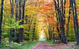 Modo della camminata di autunno Fotografie Stock