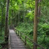 Modo della camminata nella foresta Fotografia Stock Libera da Diritti