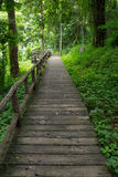Modo della camminata nella foresta Fotografia Stock