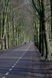 Modo della foresta Fotografie Stock Libere da Diritti