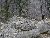 Modo della foresta nel parco nazionale di Seoraksan Fotografie Stock