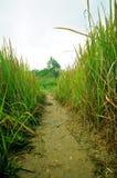Modo della passeggiata con alta erba Fotografie Stock