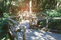 modo della passeggiata della foresta pluviale nel sentiero didattico di Ang Ka situato in intha di Doi Fotografie Stock Libere da Diritti