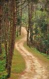 Modo della passeggiata nella giungla Immagine Stock Libera da Diritti