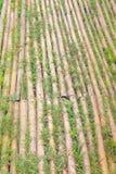 Modo di bambù della passeggiata con erba verde, fondo naturale dei modelli fotografia stock