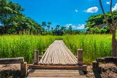 Modo di bambù sul campo in campagna della Tailandia Fotografia Stock Libera da Diritti