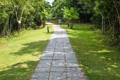 Modo di camminata con l'albero ed il prato nel parco pubblico immagini stock libere da diritti