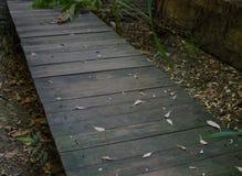 Modo di legno della passeggiata con le foglie asciutte nel giardino del abadon Immagine Stock