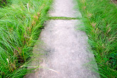 Modo di pietra della passeggiata del blocco in giardino Immagine Stock Libera da Diritti