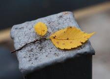 Modo do outono Fotos de Stock