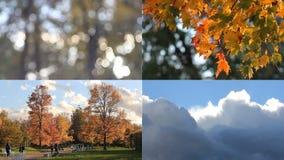 Modo do outono dia ensolarado no parque do outono vídeos de arquivo