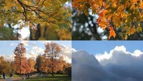 Modo do outono dia ensolarado no parque do outono video estoque