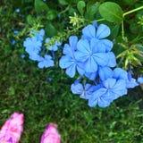 Modo floral Foto de Stock Royalty Free