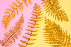 Modo floreale di estate Fern Tropical Leaf minimo immagine stock libera da diritti