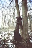 Modo in legno di inverno fotografia stock libera da diritti