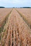 Modo nel campo di grano fotografia stock