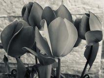 Modo preto & branco por flores na casa imagens de stock royalty free