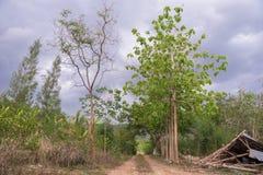 Modo rurale fotografia stock libera da diritti