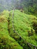 Modo sulla foresta   Fotografia Stock Libera da Diritti