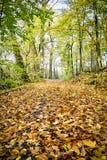 Modo in una foresta di autunno Immagini Stock Libere da Diritti