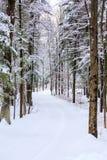 Modo verticale dell'azionamento di Snowy Fotografia Stock