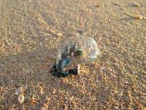 Modraka Jellyfish Na plaży zdjęcie stock