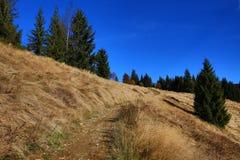 Modrava, Tree, Autumn, Sumava, Boemerwald, Czech Republic Royalty Free Stock Image