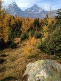 Modrzewiowa dolina Zdjęcia Stock