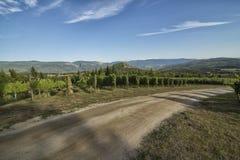 Modrzewiowa wzgórze wytwórnia win Zdjęcie Stock