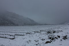 Modules photovoltaïques couverts de neige Photo stock