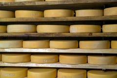 Moduli di formaggio Fotografie Stock