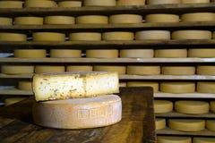 Moduli di maturazione del formaggio Fotografie Stock Libere da Diritti
