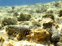 Modulo di vita dell'oceano Fotografia Stock Libera da Diritti