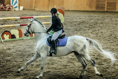 Młody żeński jeździec na białym koniu Fotografia Royalty Free
