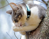 Młody kot w drzewie Obrazy Stock