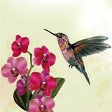 Mody kwiecisty tło z orchideą i hummingbird Zdjęcie Stock