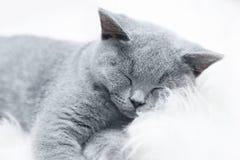 Młody śliczny kot odpoczywa na białym futerku Zdjęcia Royalty Free