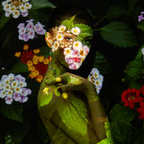 Mody sztuki portret piękne kobiety Obrazy Stock