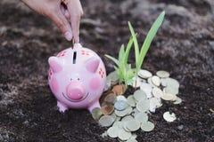 Moeda de depósito da mão no mealheiro, crescimento de dinheiro no solo Whi fotografia de stock