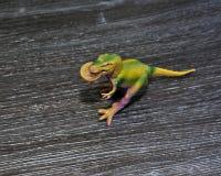 Moeda do dólar australiano na boca do ` s do dinossauro fotografia de stock royalty free
