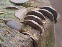 moedas Imagens de Stock