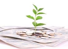 Moedas, dólares e planta isolados Fotos de Stock